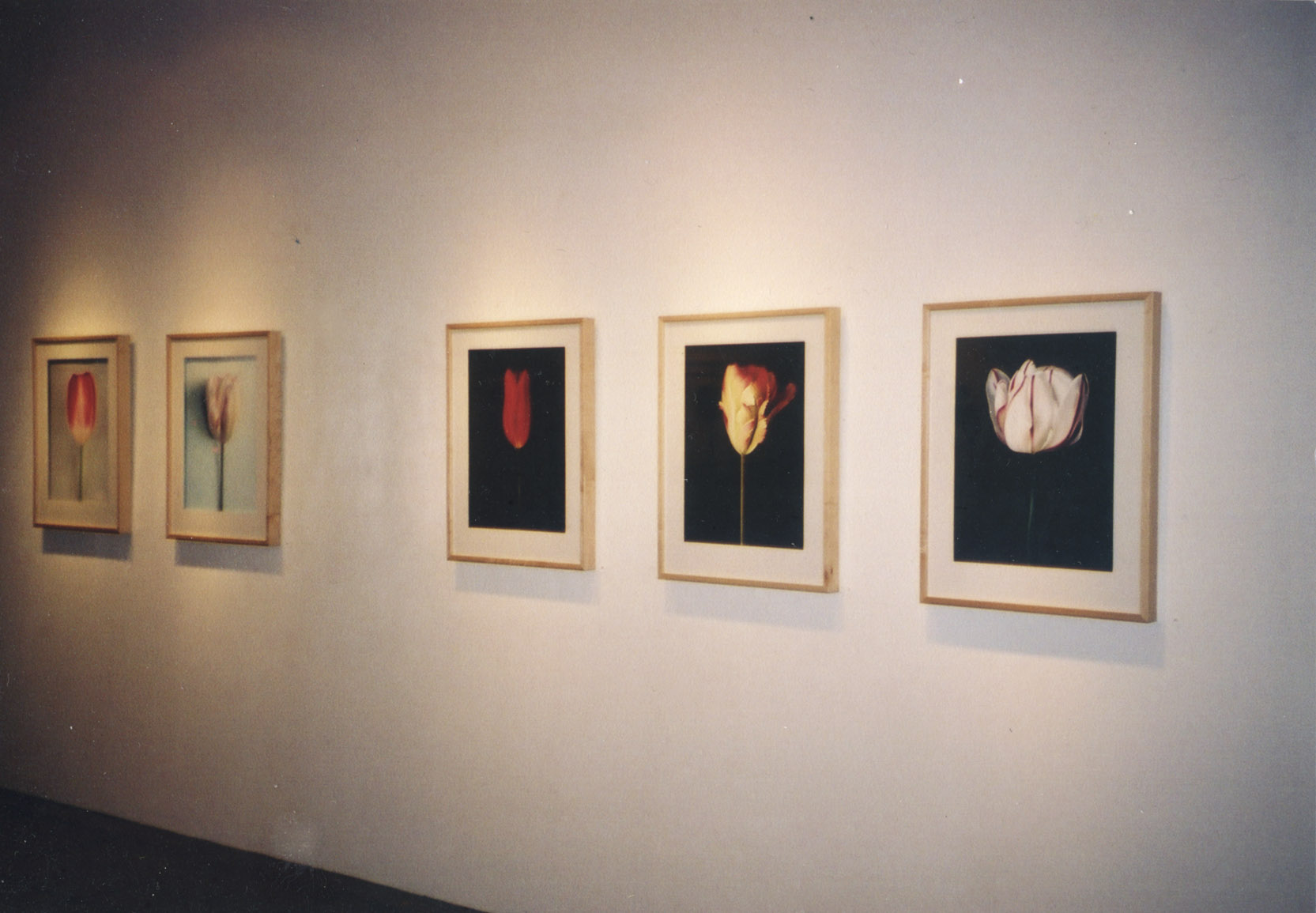 Blumenstock exhibit